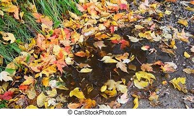 Fall leaf lying in puddle on asphalt - Fall leaf lying in a...