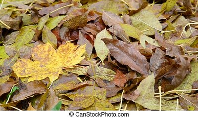 Many different leaves lie on ground, close-up - Many...