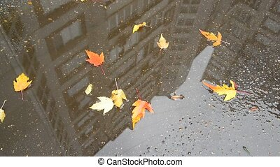 yellow maple leaf lying in puddle with reflection of...