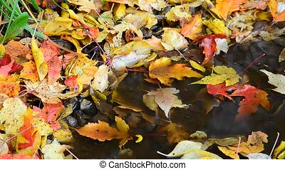 Fall leaf lying in puddle - Fall leaf lying in a puddle
