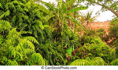 Upper View Tourist Works Way through Thick Bushes in Park -...