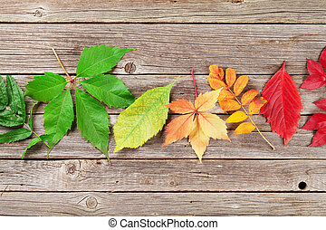 Autumn colorful leaves over wooden texture