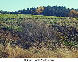 Autumn rural landscape .art rural landscape. Arkhangelsk...