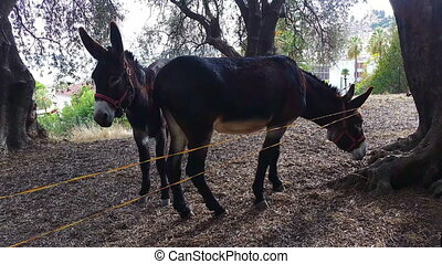Two Beautiful Brown Donkeys - Two Brown Donkeys Under the...