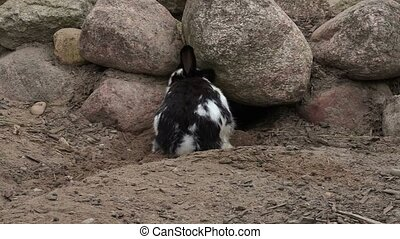 Rabbit near to the cave