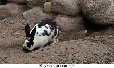 Rabbit digs passages near cave