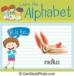 Flashcard letter R is for radius illustration