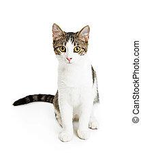 Cute Friendly Kitten Over White
