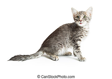Cute and Happy Gray Kiten on White - Cute kitten with happy...
