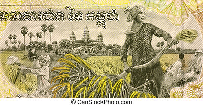 Woman Harvesting Rice on 2000 Rieles 2007 Banknote from...