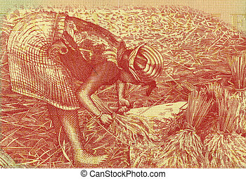 Woman Harvesting Rice on 1000 Rupiah 1987 Banknote from...
