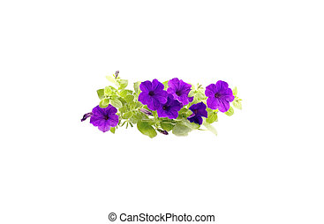 Isolated Clump Of Purple Petunias - A Clump Of Purple...