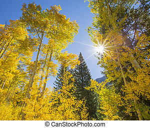 Sunny Autumn Day - A Beautiful Sunny Day In Vail, Colorado