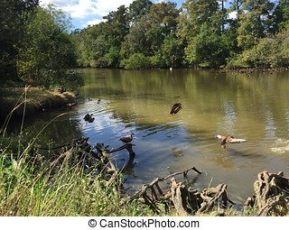 Popular Audubon Park in New Orleans, Louisiana. - birds in...