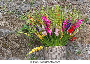 gladiola, flores, en, rosa, púrpura, amarillo, rojo, blanco,...