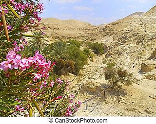 Israel sandstone desert landscape - Israelis dry and sandy...