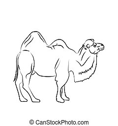 Camel is herbivorous enduring mammal with humps - Camel is...
