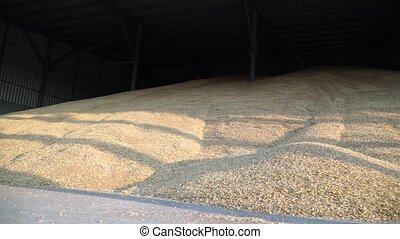 Grain lying in stock - Wheat collected from fields located...