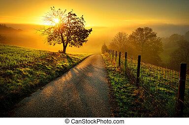 Idyllic rural landscape in golden light