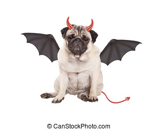 cute devilish pug puppy dog dressed up for Halloween,...