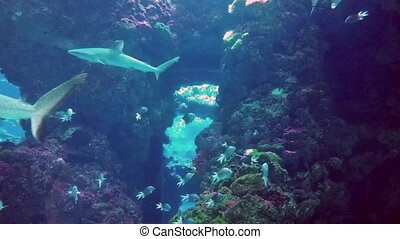 Beautiful Sharks in Aquarium - Beautiful Sharks and Tropical...