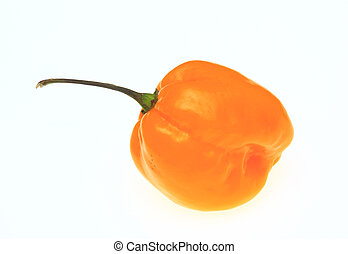 yellow chili pepper, Capsicum annuum