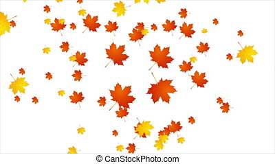 Autumn leaves video animation - Orange autumn motion design....