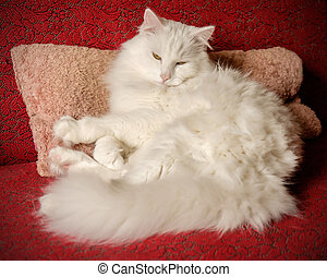 White cat on a pillow