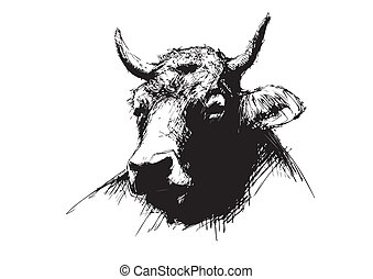 sketching of the cow in the vectors