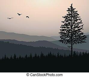 Woodland landscape.