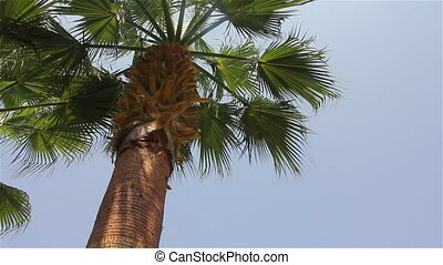 Branches and trunk of a palm tree - Palm tree trunk and...