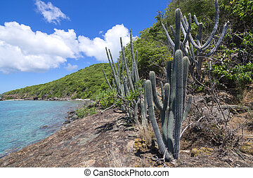 Endemic Caribbean plant species - Naturally occuring variety...