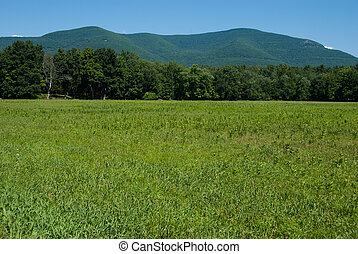 Zena Cornfield with Overlook Mountain in the Background