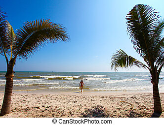 Palm trees and beach - Nice view of palm trees on the beach...