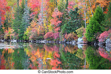 Autumn reflections - Bright autumn tree reflections in...