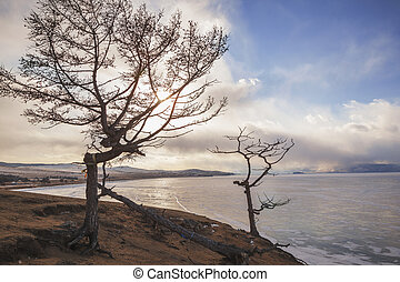 Tree, Lake Baikal, Olkhon Island. - Winter Baikal, a dead...