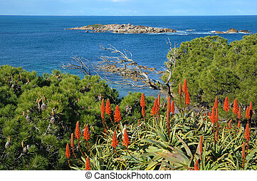 Aloe vera red flower and blue sea - Spring in the Southern...