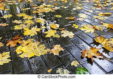 カラフルである, 葉, 秋, 玉石, ぬれた, 歩道, かえで