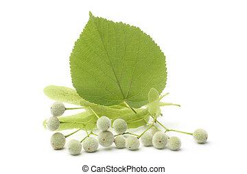 Tilia fruit  with green leaf