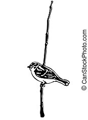 little bird on a branch sparrow - black and white vector...