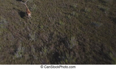 Flying close to male deers running in the smoothness - 2...