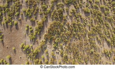 Abstract view of rock rose field from the air - Aerieal view...