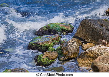 sea waves and rocks covered with algae - the waves beating...