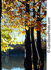 Sillingy lake in Savoy, France - Autumn landscape on...
