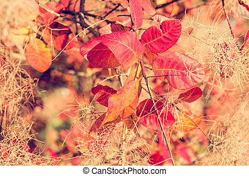Colorful fall leaves on a tree close up