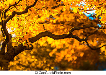 autumn tree, very shallow focus
