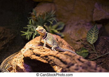 reptiles - live wild reptiles lizards shot close-up in...