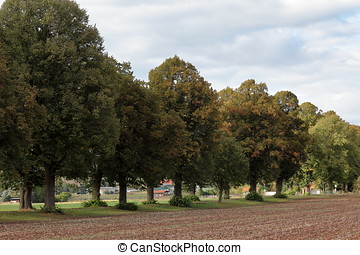 An avenue of linden trees in autumn