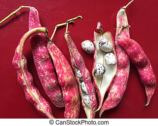 Cranberry beans - Speckled, colorful beans on a maroon...
