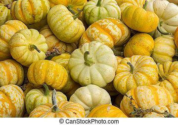 Miniature Pumpkin Assortment